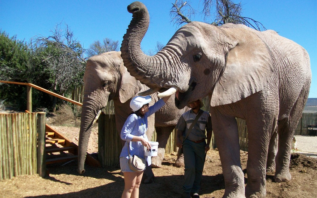 Throwback to Feeding Elephants and Choosing Experiences Over Things