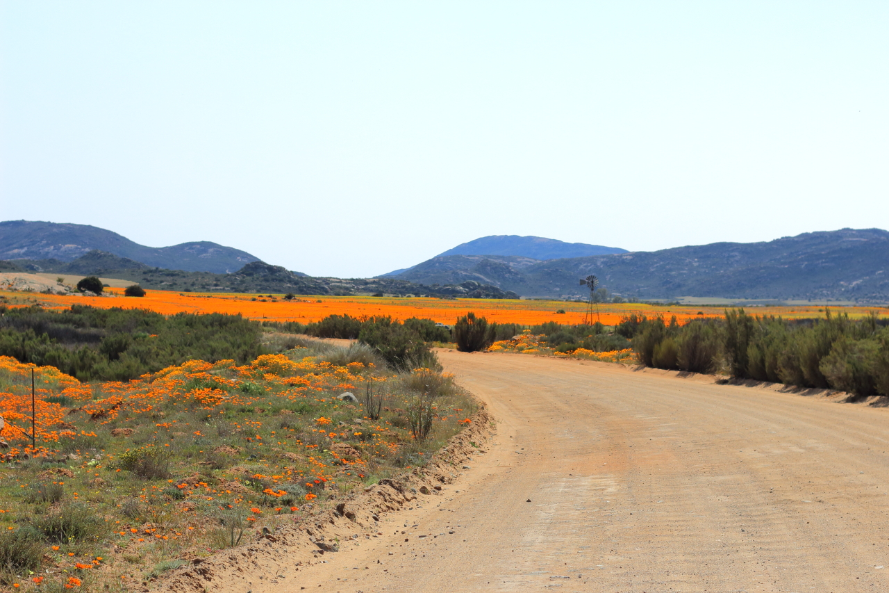 flower season in the Northern Cape