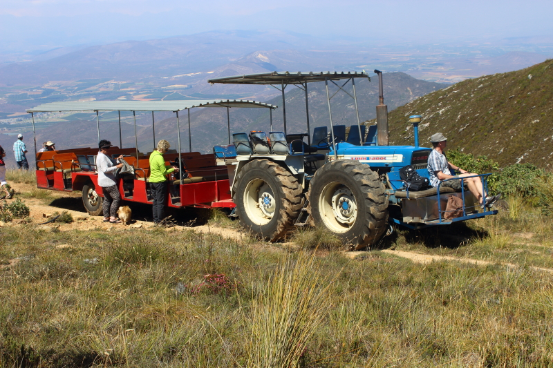 protea farm tractor ride