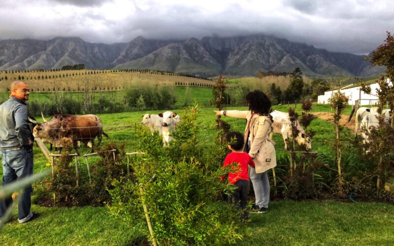 family-friendly thingss to do in Greyton
